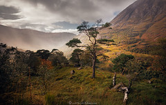 It's Autumn......nearly (Scott Robertson (Roksoff)) Tags: glennevis mist trees bennevis rivernevis scotspine steallgorge fortwilliam lochaber scottishhighlands scotland winter ice snow hail wind cold lonetree tree nikond810 1635mmf4 leefilters pine log autumn