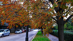 Utcakép egy októberi reggelen (Szombathely) (milankalman) Tags: park tree leaves autumn fall street city brown