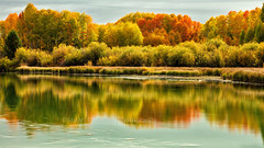 Reflection on Autumn (chasingthelight10) Tags: landscapes photography events foliage rivers places centraloregon deschutesriver dillonfalls bigeddy aspen bend oregon otherkeywords aspens autumn grove things reflection fallcolors autumncolours water trees serene usa
