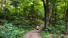 Trail Running at Champlain Lookout : July 17, 2018 (jpeltzer) Tags: luskville quebec canada ca ottawa gatineaupark gatineau running trailrunning