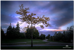 OCTOBER 2018 NGM_9038_5679-1-222 (Nick and Karen Munroe) Tags: path paths tree trees divergent single clouds cloudy cloudcover blue landscape landscapes dawn sunrise morning daybreak sunlight sunburst sun sunshine starburst fall autumn fallsplendor fallcolours karenandnick munroe karenmunroe karen ontario outdoors brampton bramptonontario ontariocanada nikon nickandkaren nickandkarenmunroe karenick23 karenick karenandnickmunroe nature canada nick d750 nikond750 munroedesigns photography munroephotoghrpahy nickmunroe munroedesignsphotography munroephotography munroenick beauty brilliant nikon2470f28 2470 2470f28 nikon2470 nikonf28 f28 colour colours color colors