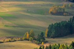 Yellow autumn (I) (Grzesiek.) Tags: dolnyśląsk lowersilesia autumn yellow fall jesień