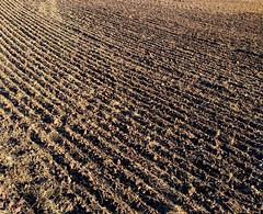 lines (Stiller Beobachter) Tags: furrows field lines