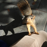 Squirrels in Ann Arbor at the University of Michigan - October 22nd, 2018 thumbnail