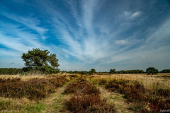 Hijkerveld (pDOTeter) Tags: ifttt 500px blue europe lines nederland peter photography personen luxem the netherlands cloud stripes dry heath heather hijkerveld tree peterphotography peterluxem thenetherlands cloudstripes