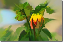 DIGITAL PAINTING (jawadn_99) Tags: fly flora yellow life garden interrestingness explore red blooming dahlia flower green beauty art artistic abstract natureinfocusgroup