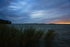 September blues (Joni Mansikka) Tags: autumn nature outdoor sea reeds sky clouds silhouettes trees evening balticsea sauvo suomi finland landscape