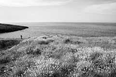 Running (Roberto Spagnoli) Tags: run running mare sea flowers helichrysum biancoenero blackandwhite girl people puglia gargano summer nature tiny sport immensity