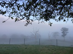 Woke to a misty morning (YAZMDG (16,000 images)) Tags: mist misty morning trees landscape pantonhill australia vic thruthemist farmlife