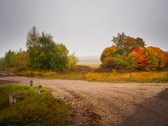 Autumn fog (banagher_links) Tags: olympus omd em10 mark iii mft micro 43 russia rain fog country
