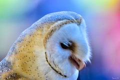 Owl -6001 (ΨᗩSᗰIᘉᗴ HᗴᘉS +23 000 000 thx) Tags: hibou owl nature pairidaiza hensyasmine namur belgium europa aaa namuroise look photo friends be wow yasminehens interest intersting eu fr greatphotographers lanamuroise hss sliderssunday