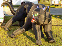 Black Cat Inflatable. (dccradio) Tags: lumberton nc northcarolina outdoors outdoor outside halloween decorations inflate inflatable grass lawn ground greenery robesonregionalagriculturalfair fair countyfair robesoncountyfair fun entertainment communityevent cat blackcat meow animal nikon coolpix l340 bridgecamera