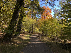 A Walk in the Park (arne.lindgren) Tags: stockholm stockholmslän sverige se djurgården path sunday appleiphonex