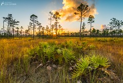 End of Summer (J.Coffman Photography) Tags: big cypress everglades national park landscape trees swamp florida united states forest marsh clouds nikon d810 hike hiking wilderness sunshine fl state preserve wet season grass tree