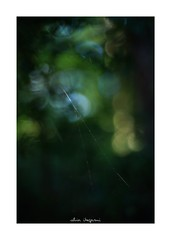 2018/9/8 - 12/21 photo by shin ikegami. - SONY ILCE‑7M2 / Lomography New Jupiter 3+ 1.5/50 L39/M (shin ikegami) Tags: sky 空 マクロ macro 井の頭公園 吉祥寺 summer 夏 sony ilce7m2 sonyilce7m2 a7ii 50mm lomography lomoartlens newjupiter3 tokyo sonycamera photo photographer 単焦点 iso800 ndfilter light shadow 自然 nature 玉ボケ bokeh depthoffield naturephotography art photography japan earth asia