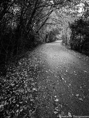 The path (B&W) (umakantht) Tags: blackandwhite blackwhite bw trail trees leaves path woods nikon nikkor1424mmf28
