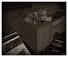 Just A Memory (Loegan Magic) Tags: secondlife stereo cat records books house blackandwhite vintage retro