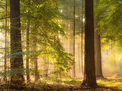 Fiaryworld (Jenne Barneveld) Tags: fairy fairyworld magical forest enchanting tree trees wood leaves autumn october morninglight morningwalk netherlands