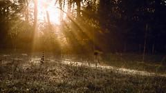 Autumn Light (jameslf) Tags: autumn berkshire dawn fog goring lardonchase mist morning oxfordshire reading river streatley sunrise thames valley