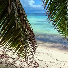 Cayo Ranas (Robyn Hooz) Tags: cayo ranas cuba palms palme spiaggia beach sand sabbia roots radici paradise paradiso caribbean caraibi