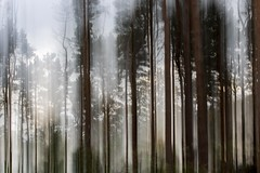 St Ives 1 (Nick Hirst) Tags: icm intentional camera movement bingleycameraclub st ives trees