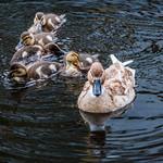 2018 - Delft - Family Canal Swim thumbnail