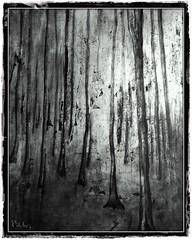Otoño (Vilchez57) Tags: óleo pintura pintor árbol árboles arboleda bosque madera textura fotografía fotógrafo blanconegro bn vilchez57