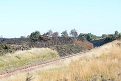 Correlation or Causation? (willjatkins) Tags: habitat heathlandwildlife heathland heathfire heathlandfire railway railwayline railtrack rarehabitat naturereserve nationalnaturereserve destructionofhabitat habitatdestruction dorsetwildlife dorsethabitat nikond610 nikon sigma105mm
