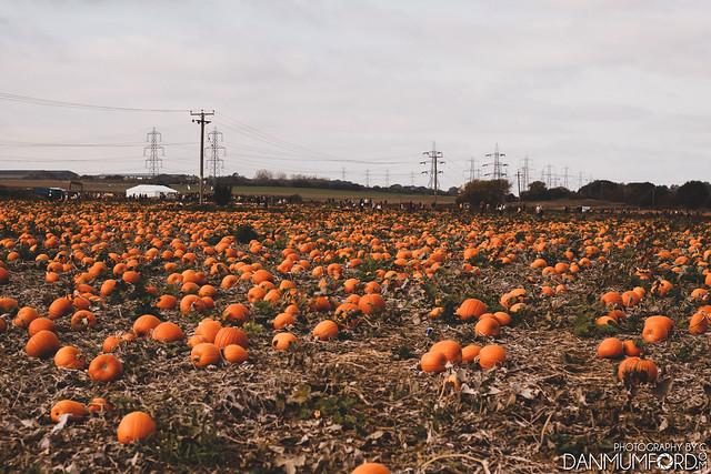 PYO Pumpkins - Beluncle Farm, Kent