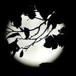 Spider in the moonlight thumbnail