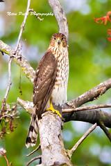 IMG_9330 (nitinpatel2) Tags: bird nature nitinpatel