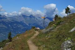 je vais prendre à gauche (bulbocode909) Tags: valais suisse nendaz siviez sentiers panneaux montagnes nature paysages arbres nuages vert bleu bissedechervé
