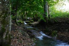 Bad Urach (mireiatarres) Tags: roca agua water waterfall bosque verde green wald río madera wood arroyo árbol tree leaves hojas