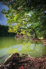 Green lake (PhotoChampions) Tags: lake see plötschersee water landscape wasser landschaft schleswigholstein germany deutschland forest wald tress bäume green grün reflection reflexion reflektion