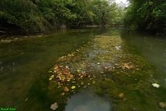 Niveau d'eau très bas sur le Lison du coté d'Echay (francky25) Tags: niveau deau très bas sur le lison du coté dechay franchecomté doubs rivière sécheresse étiage automne