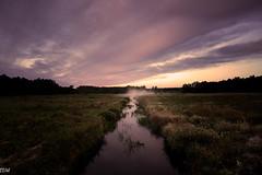 Cranberry Bog (MikeWeinhold) Tags: cranberry bog carlise massachusetts dawn