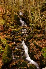 small fervency (mercedescasal) Tags: riverasacra fervenza otoño rio bosque hojas galicia