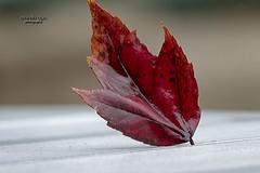 autumn ... again (mariola aga) Tags: autumn rain leaf seasons change