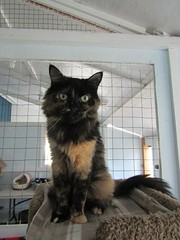 Aly - 8 year old spayed female