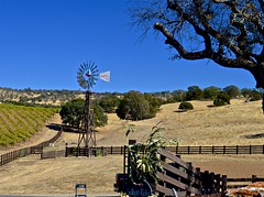 Rancho Victoria Winery (David McSpadden) Tags: amadorbigcrush placerville wineries rancho victoria winery