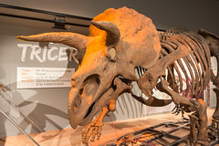 180324 Washington-17.jpg (Bruce Batten) Tags: animals businessresearchtrips dinosaurs locations museums occasions reptiles shadows subjects trips usa vertebrates washingtondc