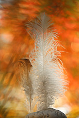 O plume suspend ton vol....-mother and son sur un bokeh d'automne... (FLOCVROFF) Tags: feather chivaroff automne 250mm bokeh light shadow bokehnature