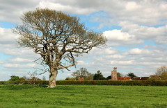 The Tree and the Tower (iwys) Tags: lone tree tower castle field white clouds blue sky grass warblington england english hampshire langstone emsowrth rural scene countryside