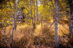 Home (jde95tln) Tags: eastern sierras fall colors colorful color leaves trees grass clouds