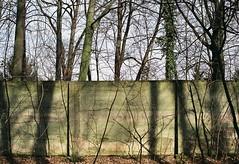 (kotmariusz) Tags: trees wall shadows poland 35mm filmphotography analog