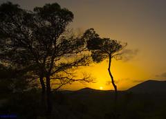 atardecer (miguelmoll387) Tags: atardecer nikon nikon7100 sigma naturaleza nature puestadesol crepúsculo twilight árboles trees sigma1770 campo montaña mountain sol cielo sun sky nubes clouds paisaje landscape anochecer