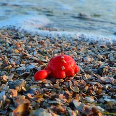 48624432 (aniaerm) Tags: sea coastalfinds sand