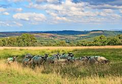 Shady Characters ! (maureen bracewell) Tags: yorkshire trees england uk maureenbracewell cannon nature summer sunshine shade shadow clouds rural countryside farming