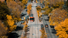 Fall from the Top (pauses) Tags: 2018 october nopeople aerial fall fewpeople spadina architecture daniels ttc toronto colourimage streetcar canada uoft yellow ontario universityoftoronto ca
