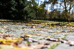 Graz November 2018_Karin Wernig_0048 (Foto-Karin.at) Tags: graz stadtpark austria herbst autumn technic natur dach altstadt überdendächern ginko wind